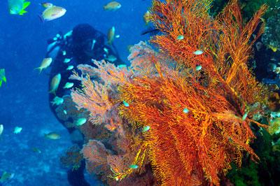 corso advanced water diver