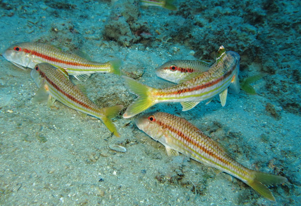 Linea laterale dei pesci
