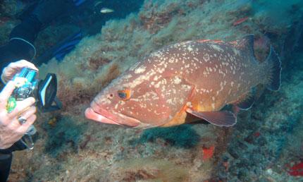 Corso fotografia subacquea