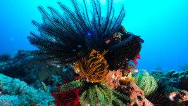 Immersioni ai Tropici