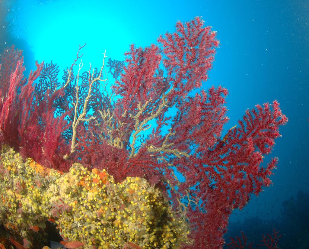 Prom. Portofino: Secca dell'Isuela